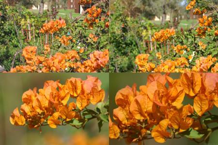 Flowers_Portrait_In